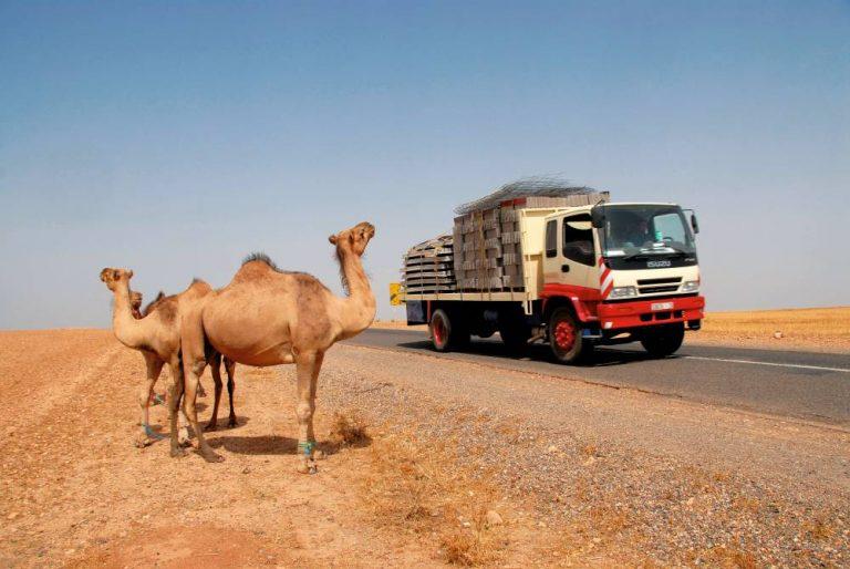 El transporte en las montañas del Atlas