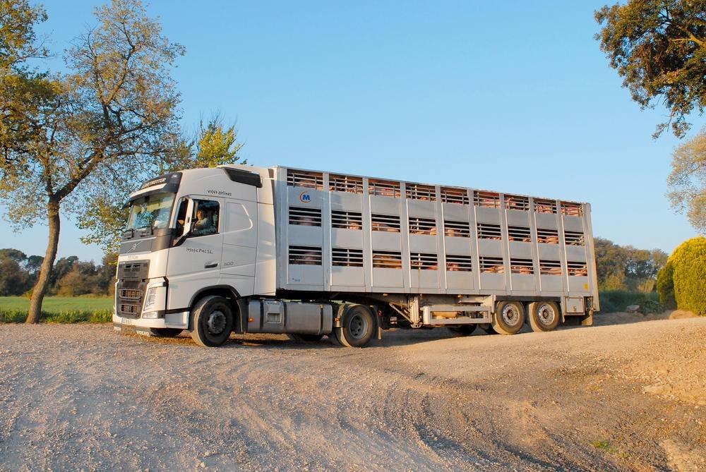 Logistic Porc